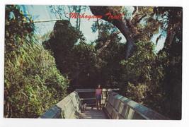 Mahogany Trail Florida Everglades National Park Trees Boardwalk Vintage ... - $7.56