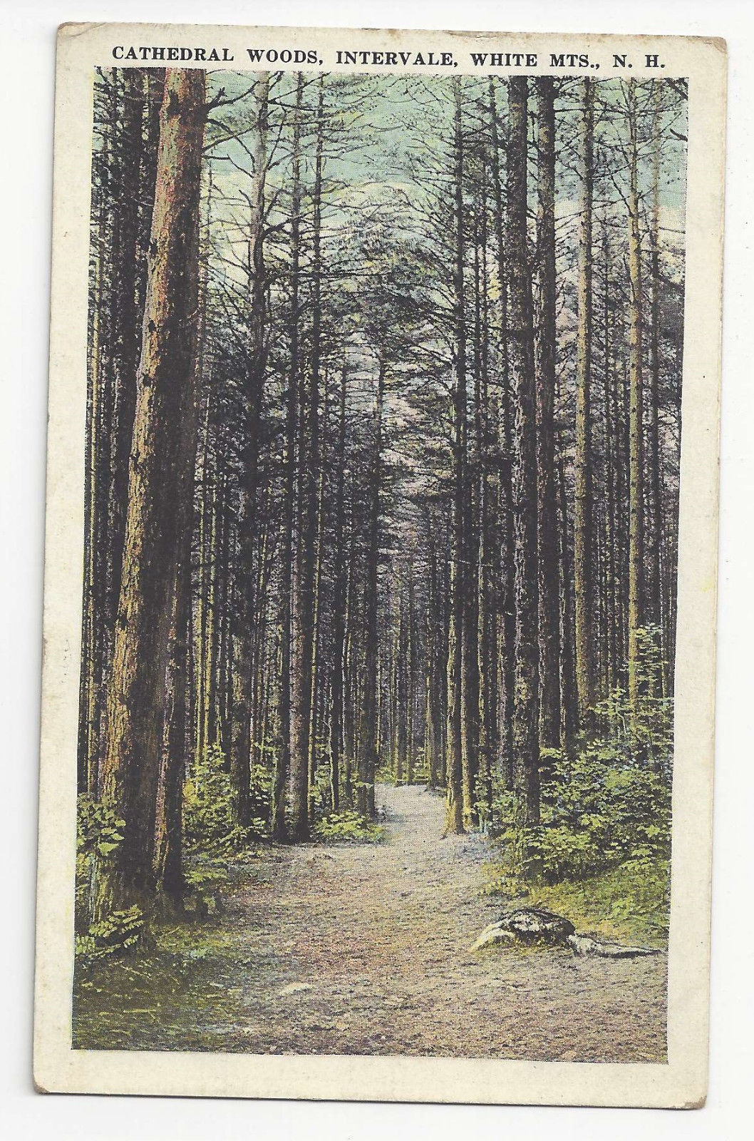 NH Intervale White Mountains Cathedral Woods Vtg Postcard