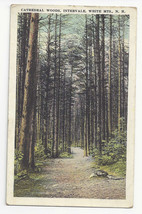 NH Intervale White Mountains Cathedral Woods Vtg Postcard - $5.52