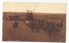 Harvesting in California Vintage Sepia Postcard California Sales Co ca 1912 - $9.65
