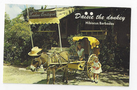 Barbados Hibiscus St. James Daisie the Donkey and Cart Vintage Postcard - $9.65