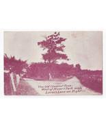 Neffs PA Allentown Moser's Park Old Chestnut Tree Lover's Lane Vintage P... - $9.65