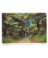 HI Fern Forest Volcanoes National Park Tree Ferns Vtg Hawaii Postcard 4X6 - $5.52