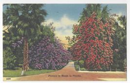 FL Flowers in Bloom in Florida Vintage 1957 Tichnor Linen Postcard - $5.81