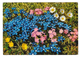 Austria Switzerland Alpine Flowers Postcard 4X6 - $5.52