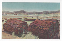 AZ Petrified Forest Agartized Logs 1939 Curteich Linen Postcard - $4.99