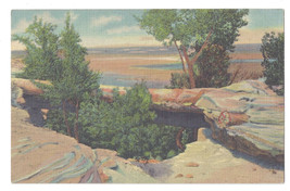 AZ Petrified Forest Natural Bridge 1939 Curteich Linen Postcard - $5.52