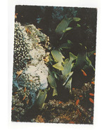 Tropical Caribbean Fish Pagres Mouchetees Speckled Snapper Vtg Postcard 4X6 - $5.52