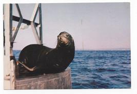 Seatlle WA Tillicum Blake Island State Marine Park Sea Lion Vintage Post... - $6.69