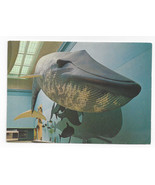 Blue Whale Washington DC National Museum Natural History Smithsonian Pos... - $4.99
