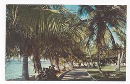 FL Palm Beach Lake Trail Vintage 1969 Postcard - $4.84