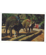 Elephants Thailand Working pushing Timbers with Trunks Vtg Postcard - $6.69