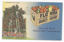 FL Oranges Grapefruit Crate of Florida Fruit 1953 Curteich Linen Postcard - $5.52
