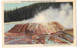 WY Yellowstone Park Sponge Geyser Vtg Haynes Linen Postcard Wyoming - $4.99