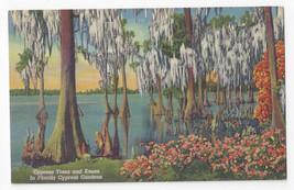 Cypress Gardens FL Trees and Knees 1939 Curteich Linen Postcard - $4.84