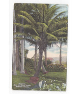 Hawaii Cocoanut Date and Royal Palms Vintage Postcard - $5.52