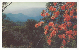 NC Flame Azaleas Mile High Overlook Waynesville Blue Ridge Parkway Vtg Postcard - $5.81
