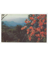 NC Flame Azaleas Mile High Overlook Waynesville Blue Ridge Parkway Vtg P... - $5.81