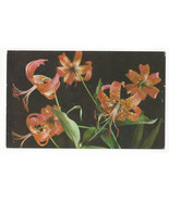 Flowers Wild Tiger Lily Blue Ridge and Great Smoky Mountains Vtg Postcard - $4.99
