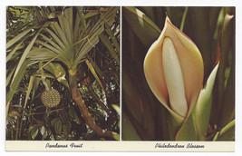 Florida Tropical Plants Pandanas Fruit Philodendron Blossom Vintage Postcard - $5.81