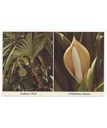 Florida Tropical Plants Pandanas Fruit Philodendron Blossom Vintage Post... - $5.81