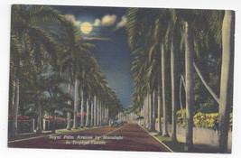 FL Royal Palm Avenue by Moonlight 1953 Curteich Linen Postcard - $4.99