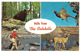 NY Hello from the Catskills Multiview Bear Dear Pheasant Fishing Vtg Pos... - $6.49