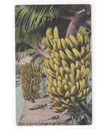 HI Banana Bunch from Hawaiian Islands Vtg Island Curio Territory Postcard - $5.50