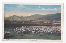CA Sheep Western Meat Co South San Francisco Co Van Noy Postcard - $6.64