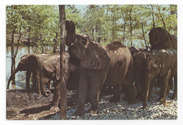 Great Adventure Jackson NJ Safari Park Elephants 1974 Vintage Postcard 4x6 - $9.45