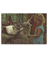 Great Adventure Jackson NJ Amusement Park Tame Reindeer 1974 Postcard 4x6 - $9.45