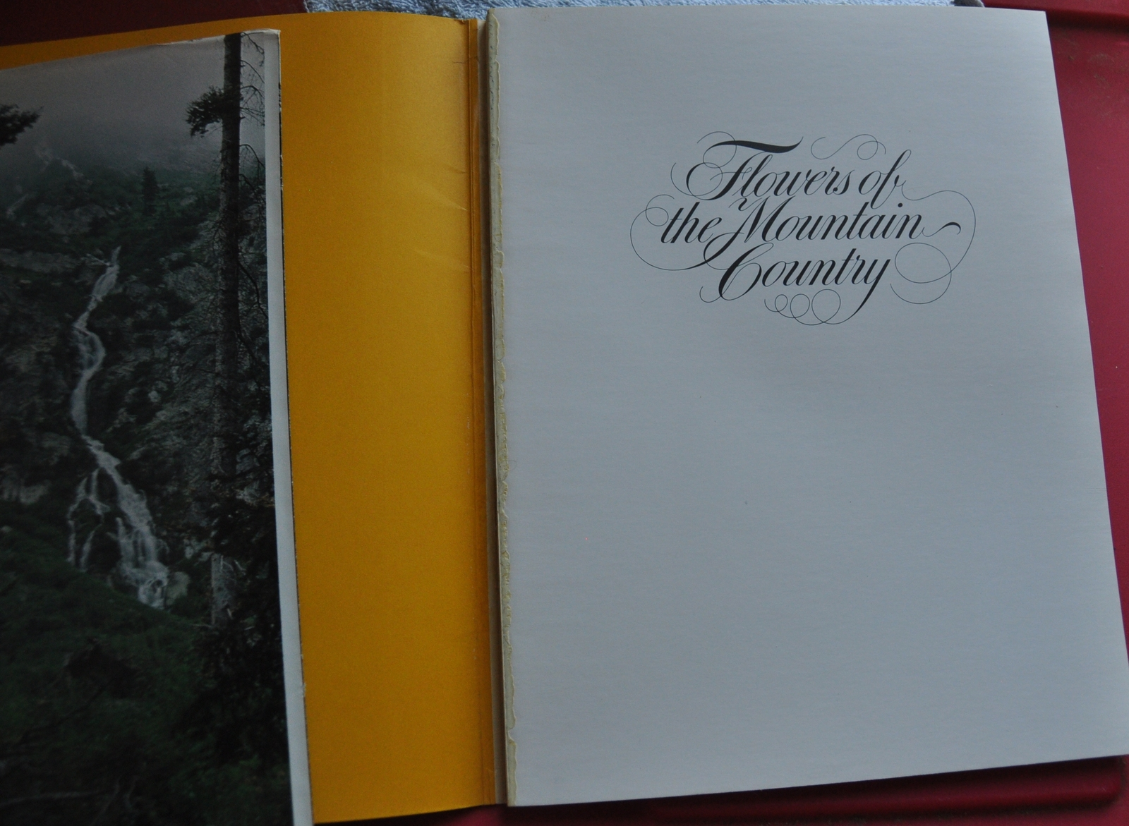 Photography of Bill Ratcliffe -Rare Vintage Book Flowers of the Mountain Country