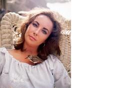 Elizabeth Taylor MM Vintage 8X10 Color Movie Memorabilia Photo - $4.99