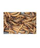 2000 Prime Live Super-Worms Fishing Bait & Pet Food Fast Shipping - $59.99