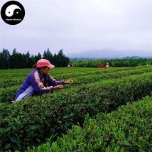 Buy Green Tea Tree Seeds 120pcs Plant Dong Ting Biluochun For Pi Luo Chu... - $15.99