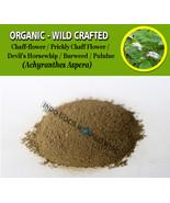 POWDER Prickly Chaff Flower Devil's Horsewhip Burweed Pululue Achyranthe... - $16.40+