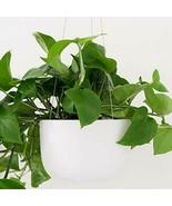 "Ceramic Hanging Planter 6"" or 8"" - Hanging Hand Glazed Flower Pot White ... - $35.00+"