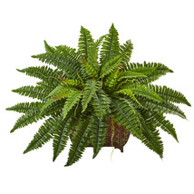 Boston Fern in Metallic Planter - ₹5,076.54 INR