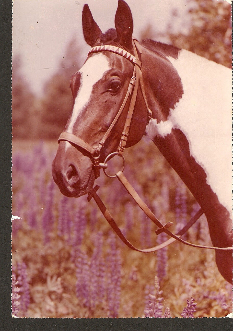 Primary image for Poland photo postcard of Horse - RUCH foto Z. Raczkowska - size 11x17 cm