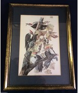 "Woodpeckers birds Art Print wall hanging Soft Decor 15.5"" x 11.5"" nice - $42.00"