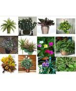 Happy Hill Plants Plant sample item