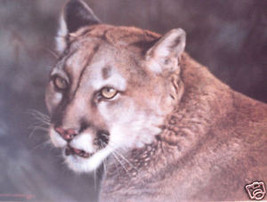 Carl Brenders Close up Cougar LTD ED Print #71 Mint! - $79.19