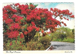 Royal Poinciana Hawaii Flower Tree Vintage Postcard 4X6 - $4.74