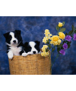 Border Collie Puppies Checkbook Cover - $7.99