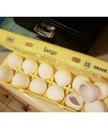100x Diversion EGG SAFE Hidden Secret Stash Money Egg Bank WATERTIGHT WH... - €71,14 EUR