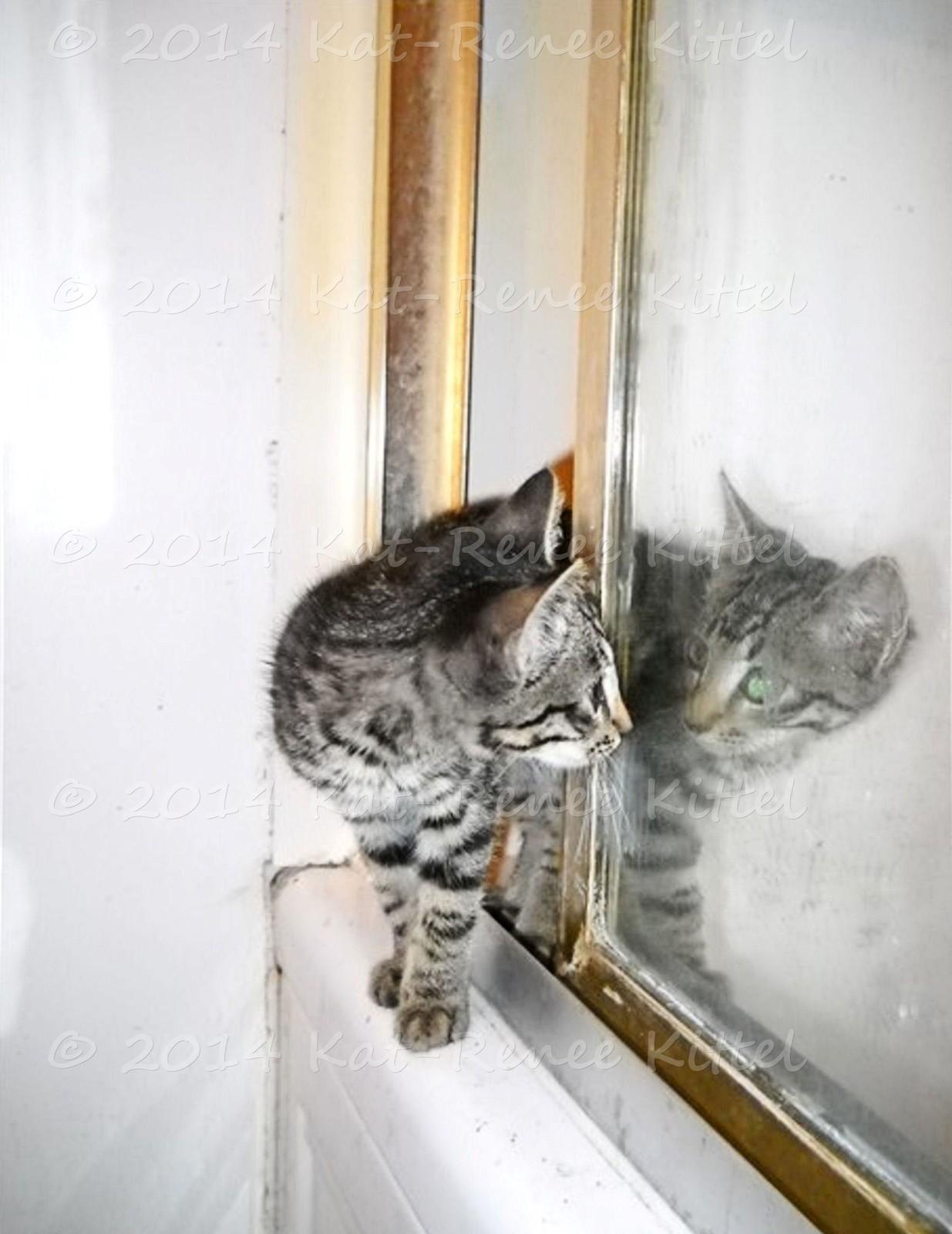 Mirror Kitten National Geographic Original Photo Cat Print Kat-Renee Kittel