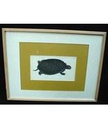 c.1793 F.P. Nodder Turtle Hand Colored Book Plate Print - $40.00