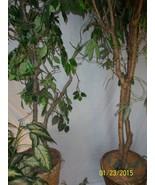 FOUR  Artificial TREE Silk Plants, with BASKET - $110.00