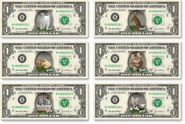 CAT Pictures on REAL DOLLAR BILLS - Gift for Pet Animal Lovers Vet Cash ... - $3.33
