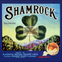 Re Print Picture Of Old Fruit Crate Label   Shamrock Oranges  - $6.00